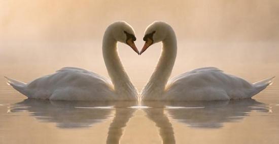 картинки про верность и любовь