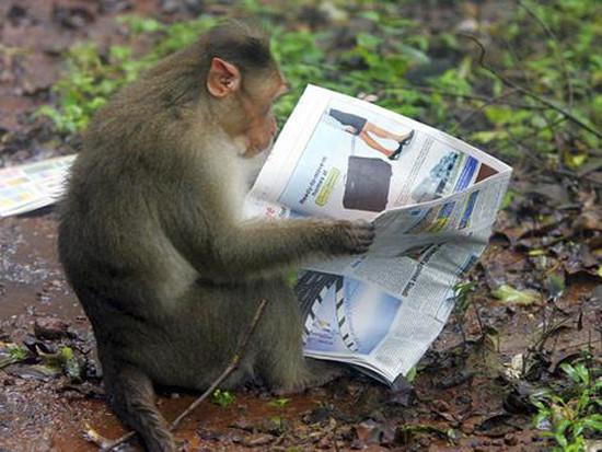 Анекдот про обезьяну гтрк курган официальный сайт новости